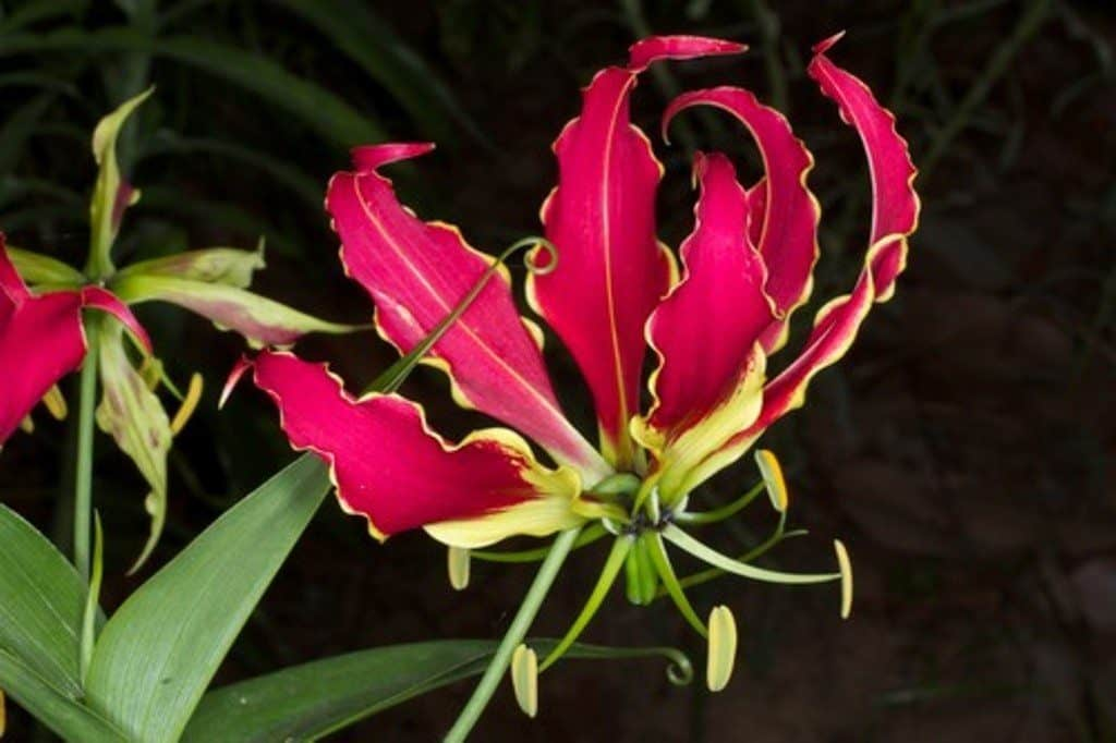 21 Most Expensive Flowers in the World