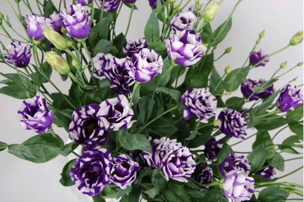 21 Most Expensive Flowers in the World 19