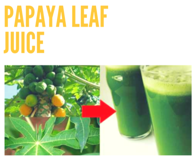 Papaya Leaf Juice Benefits