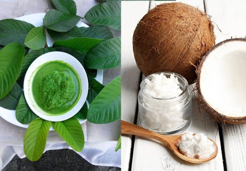 What Are The Benefits Of Guava Leaves For Beauty 2 Diy