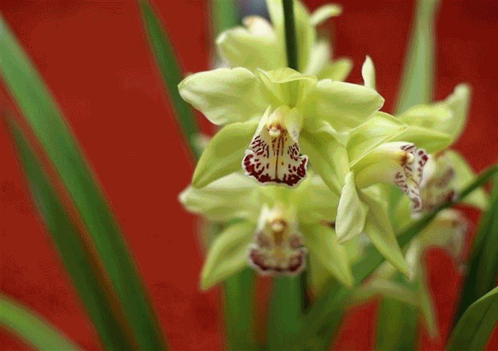 21 Most Expensive Flowers in the World 8
