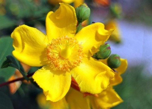 What are Benefits of St. Jon's Wort Oil?