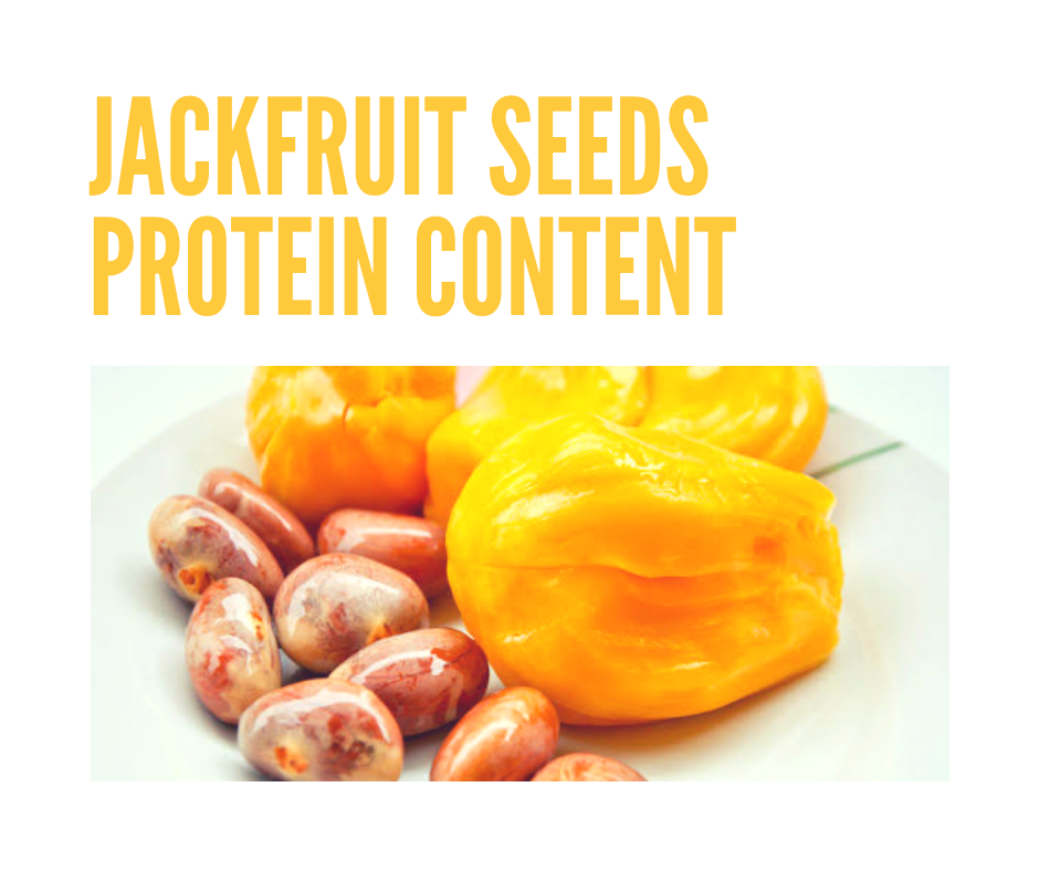 jackfruit seeds protein content