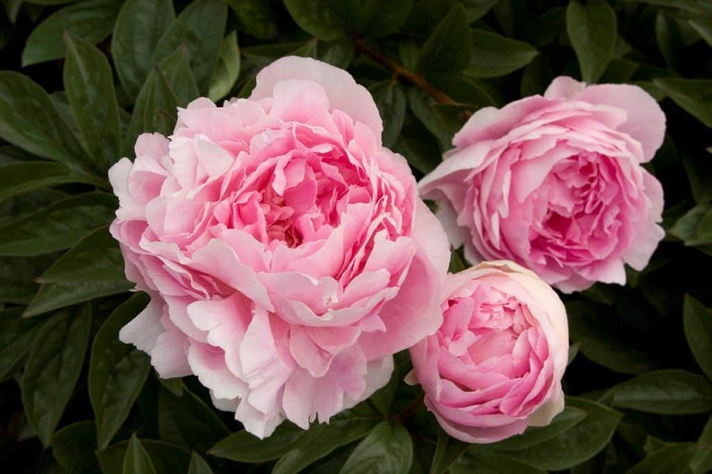 21 Most Expensive Flowers in the World 17